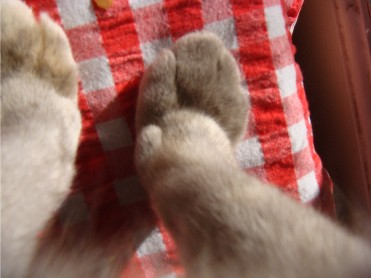 Cat's feet coming out of the One Self - Richard Lang
