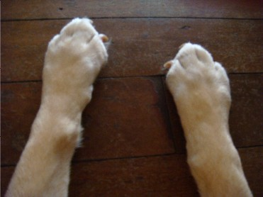 Dog's feet coming out of the One Self - Richard Lang